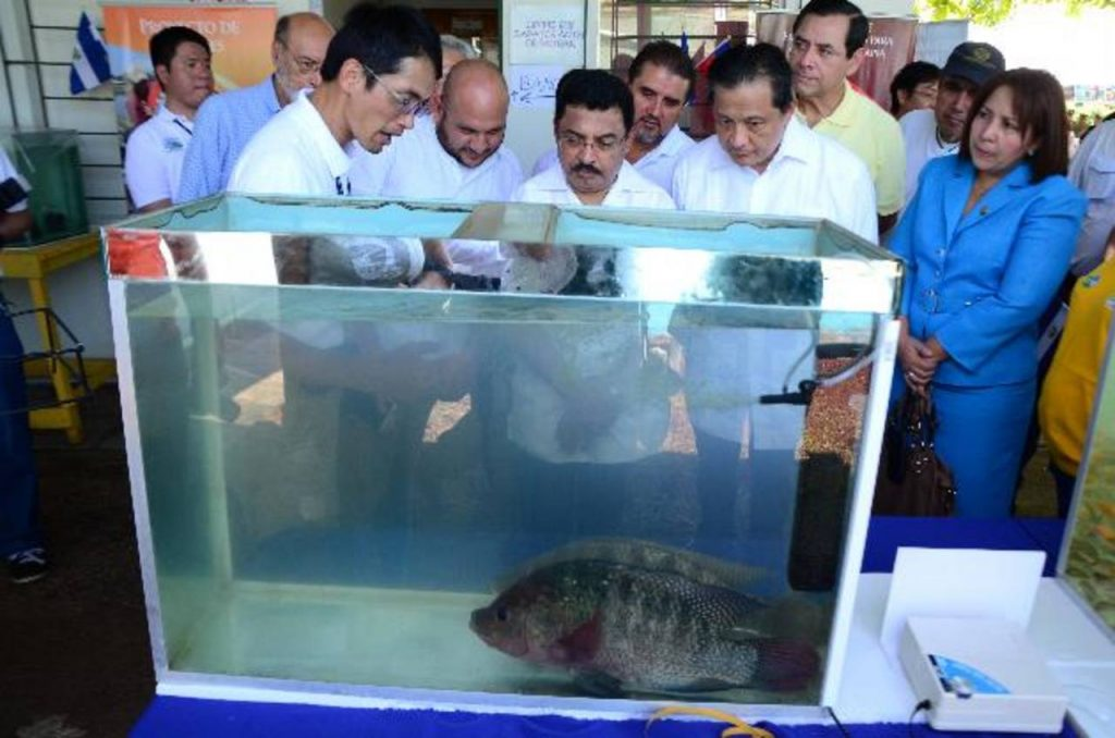 Misi n t cnica de taiw n entrega proyectos acu colas for Proyecto de tilapia en estanques