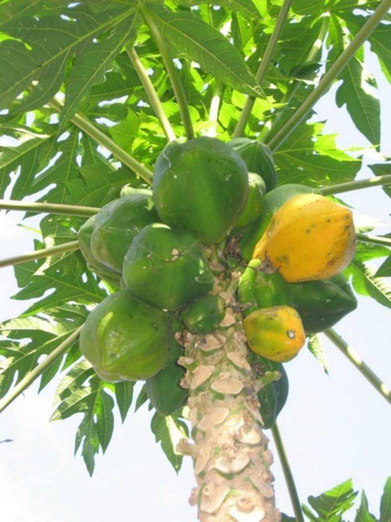 Sembrar rboles frutales abre espacio al progreso de todos - Plantar arboles frutales ...