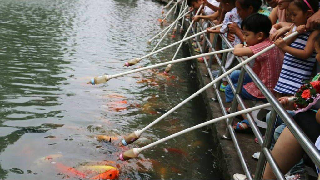 Chinos dan comida a peces con biberones for Imagenes de peces chinos
