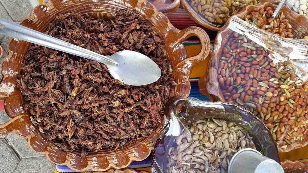 m xico y el arte de cocinar insectos