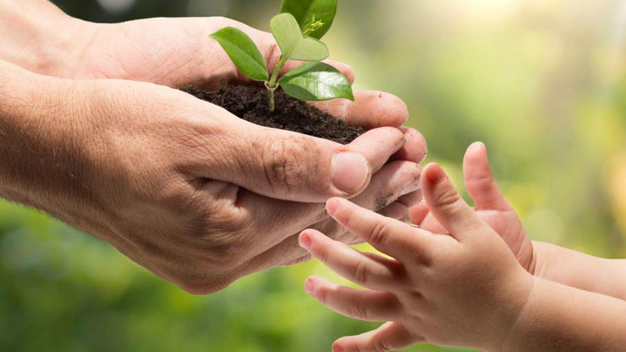 8 acciones para cuidar el medioambiente - Como cuidar las hortensias de exterior ...