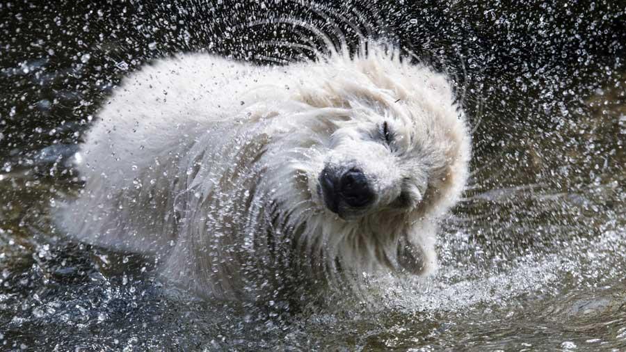 Imagenes increibles de animales 10 incre 237 bles im 225 genes de animales que muestran toda su - Animales salvajes apareandose ...