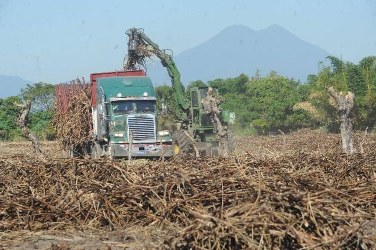 En el país hay unas 94 mil manzanas de tierras cultivadas con caña. Foto EDH / archivo