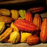El cacaotal requiere inversión en los primeros dos o tres años y puede explotarse hasta por 30 años. FOTO EDH / cortesía