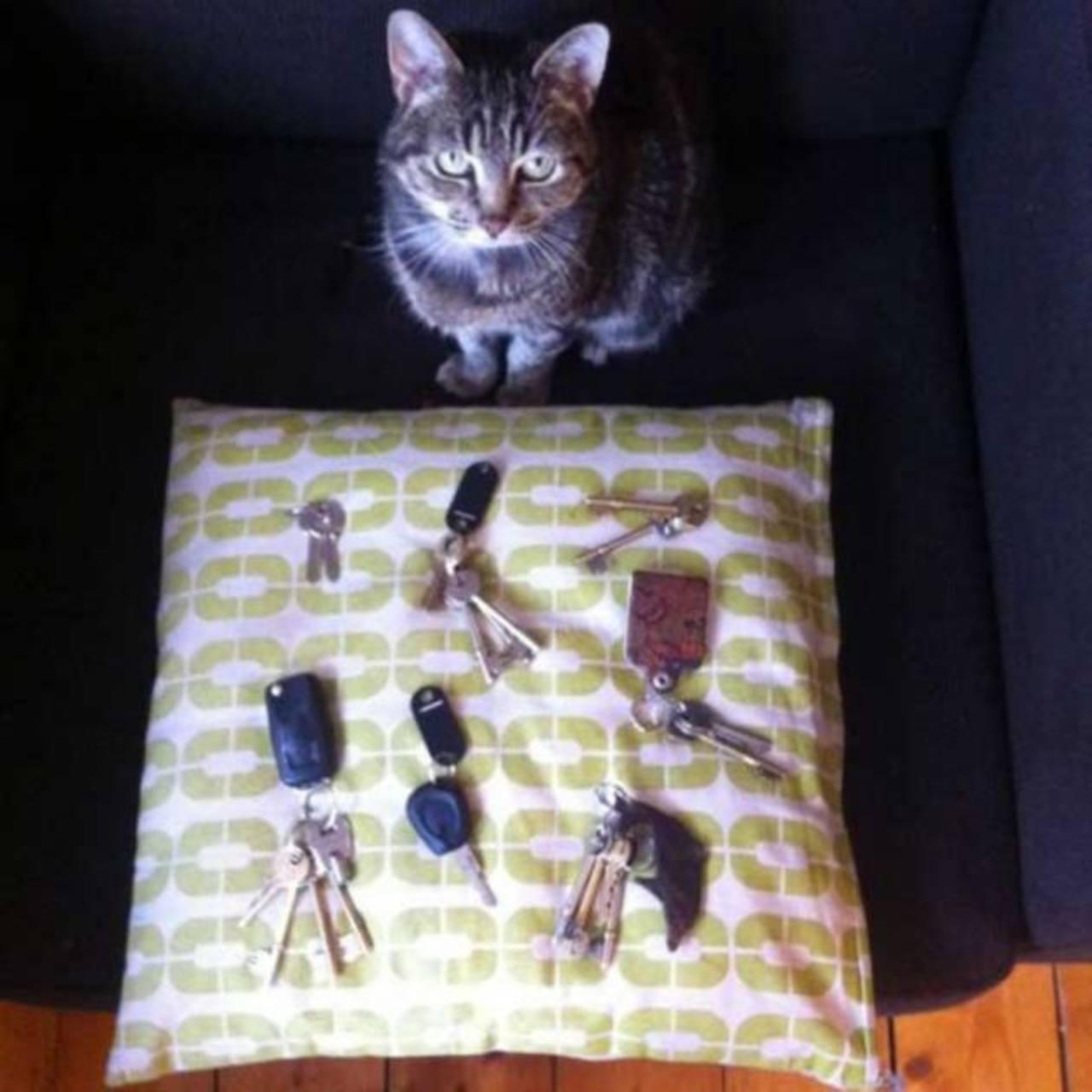 """Gato """"roba"""" 26 juegos de llaves, Londres"""