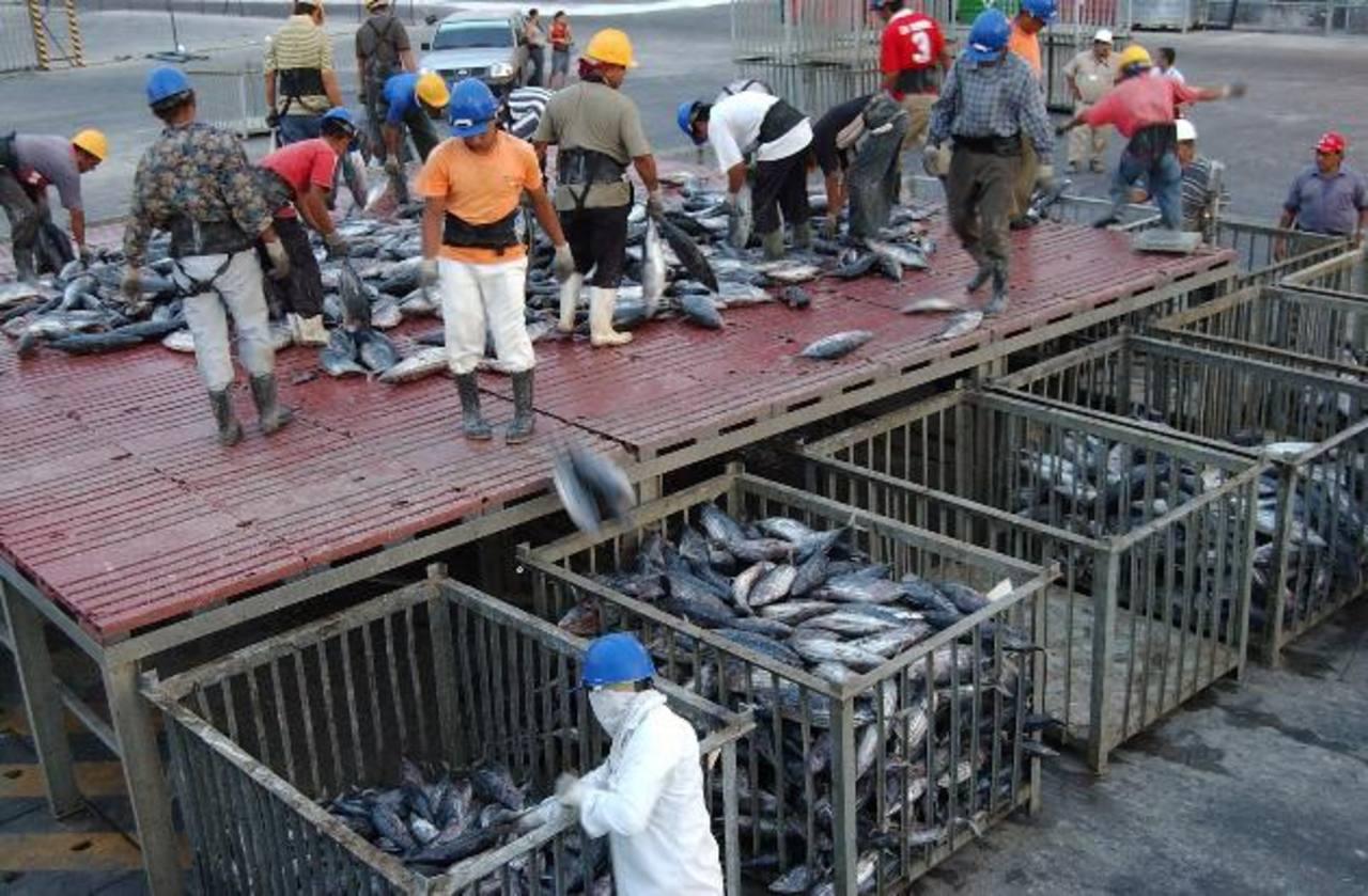El grupo aumentará a 37 millones las toneladas de pescado procesado. fotos edh / archivo