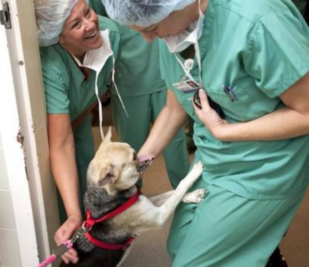 La perra que salvó a dos niñas en Filipinas vence el cáncer