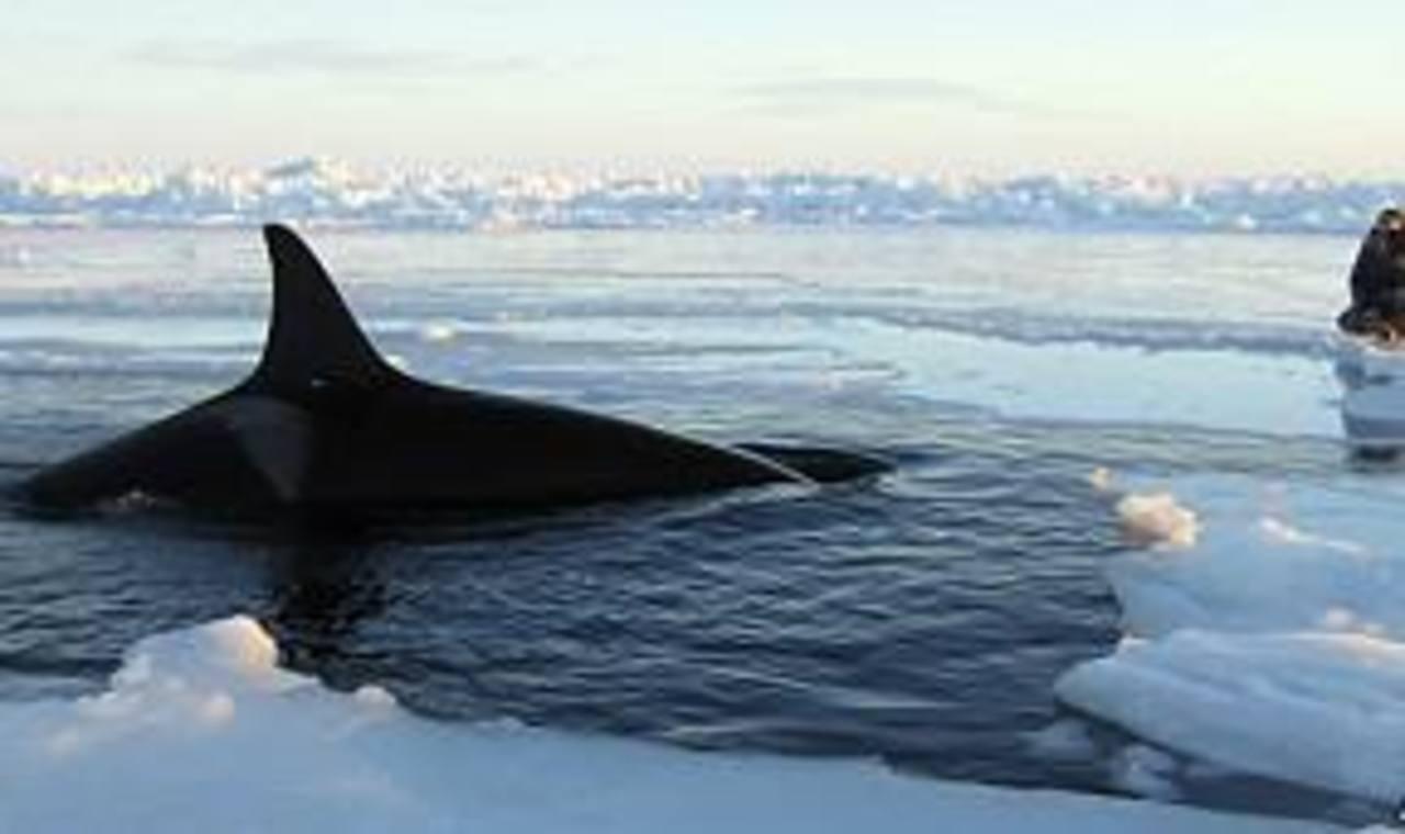 El desplazamiento de hielo habría contribuido a que lograran salir al mar. FOTO EDH