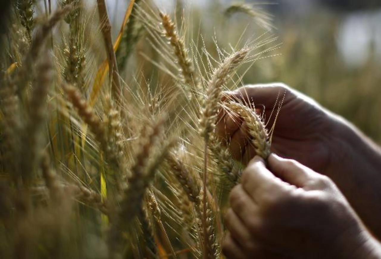 Estados Unidos es uno de los mayores productores y exportadores de cereales en el mundo. foto eDH /ARCHIVO