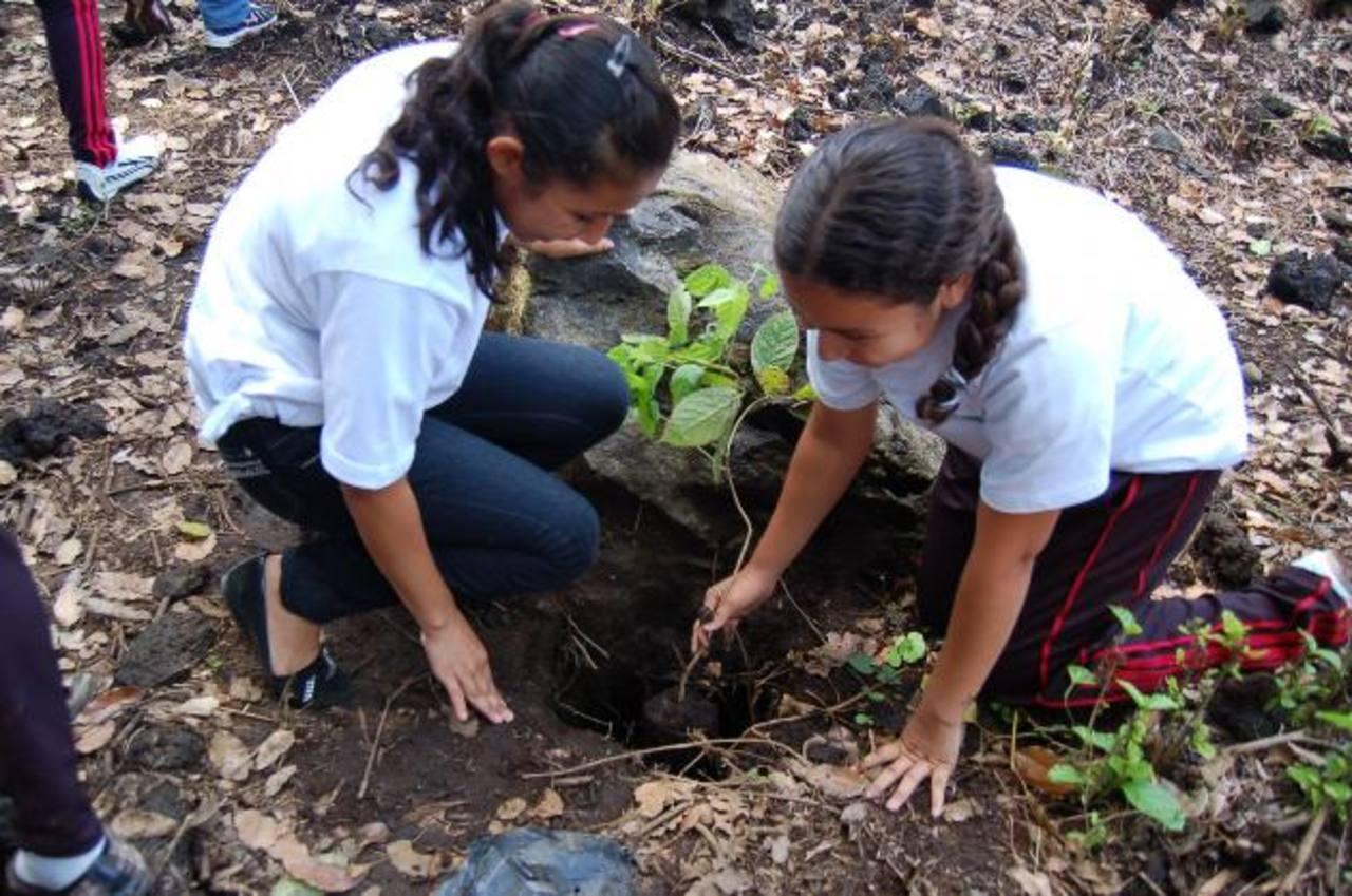 La siembra de árboles debe hacerse de forma oportuna y con especies adecuadas a las condiciones del terreno que se reforeste. foto edh / archivo