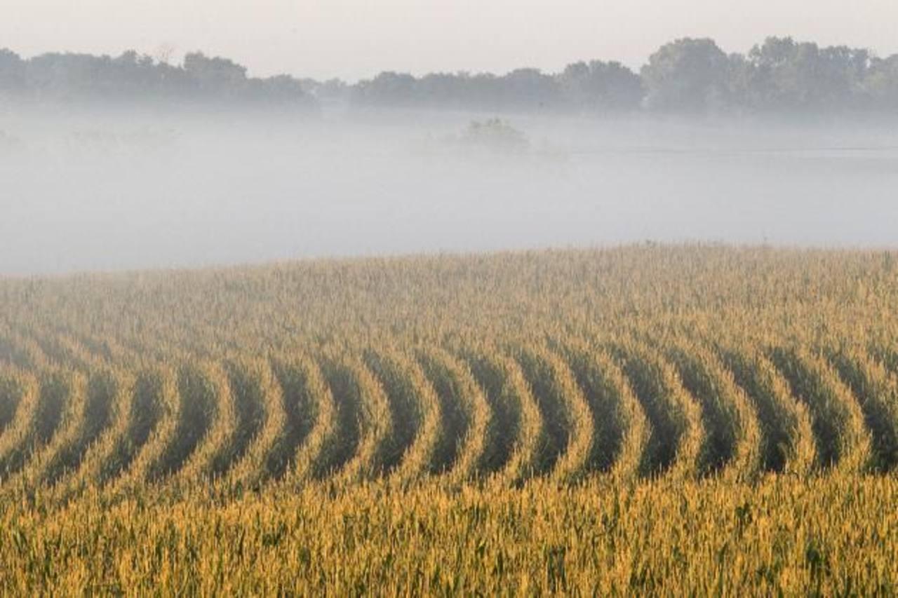 La producción de granos básicos en Estados Unidos fue golpeada el año pasado por una sequía. Foto EDH