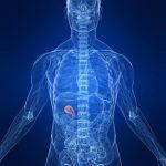Cálculos biliares, un mal silencioso y muy común