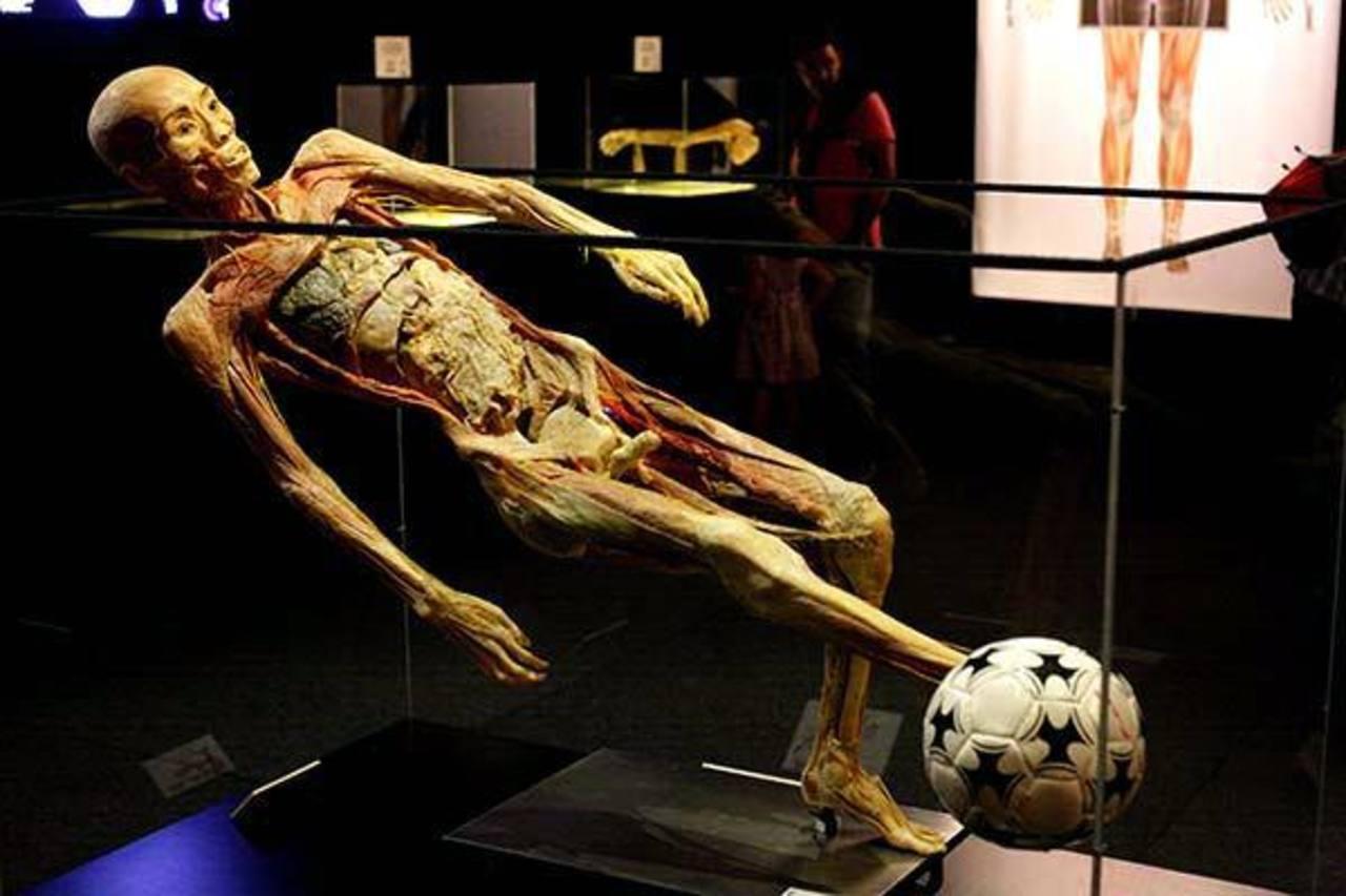 La exhibición de cuerpos humanos llega a San Salvador