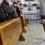 Desde que murió la dueña, su perro Ciccio asiste todos los días a misa a la espera del regreso de la anciana propietaria. Foto tomada de internet