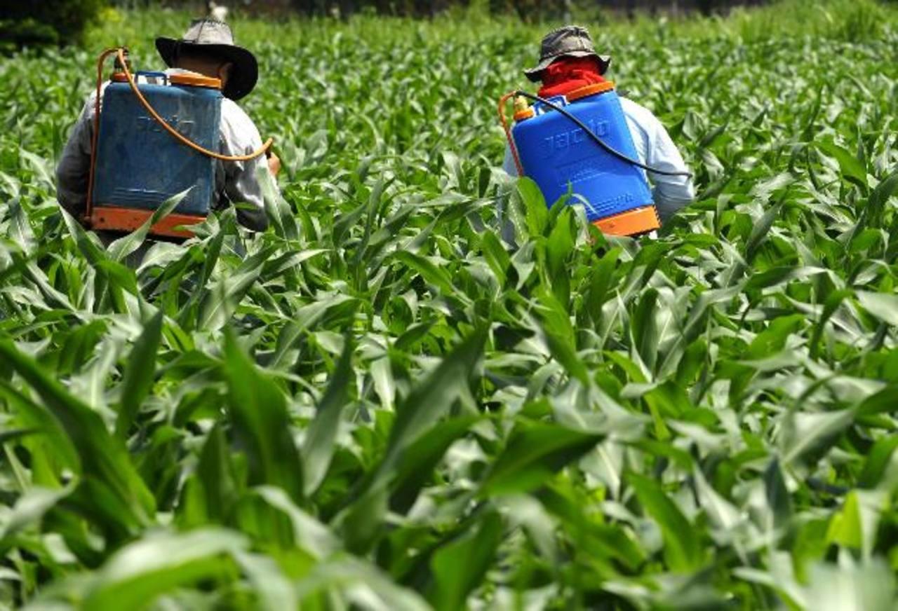 El acceso a tecnología, capacitación e infraestructura debería ser la prioridad de Ministerio de Agricultura, opinaron especialistas. Foto EDH / archivo