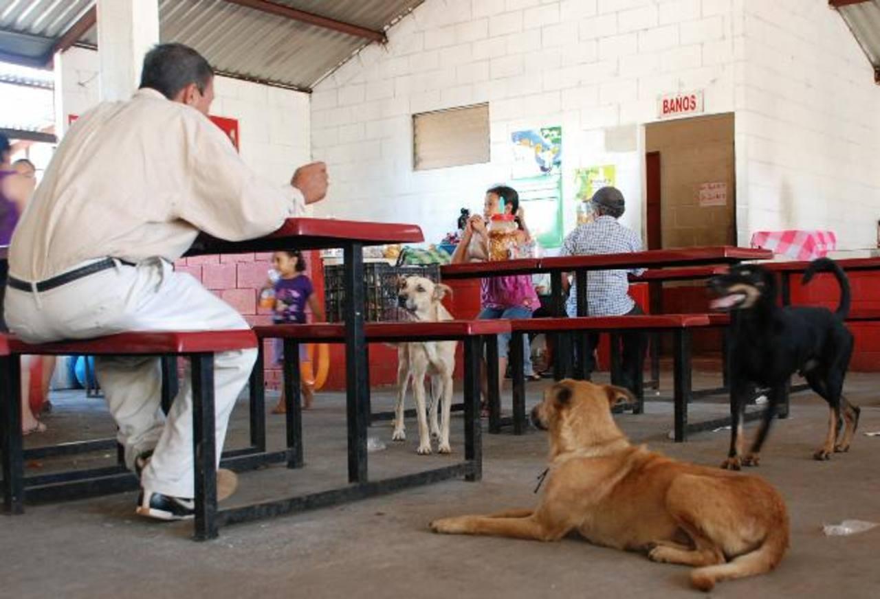 El área de comedores es una de las preferidas por los canes en el mercado de Jucuapa. foto edh / lucinda quintanilla