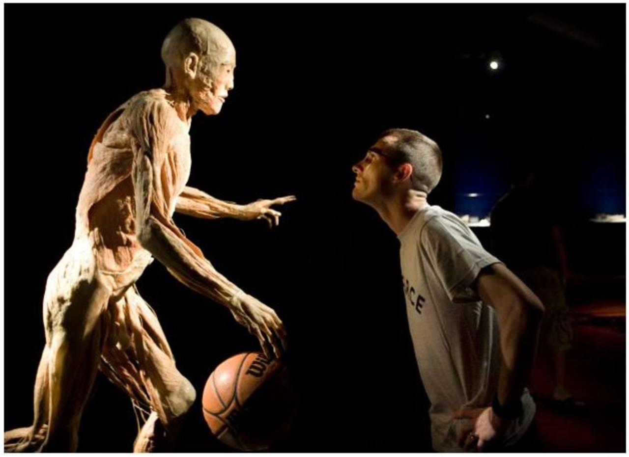 Our Body, una ventana hacia el interior del cuerpo humano ...