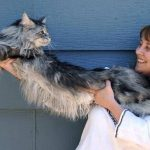 En esta foto de 2009, la dueña de Stewie lo estira para mostrar su longitud. FOTO AP