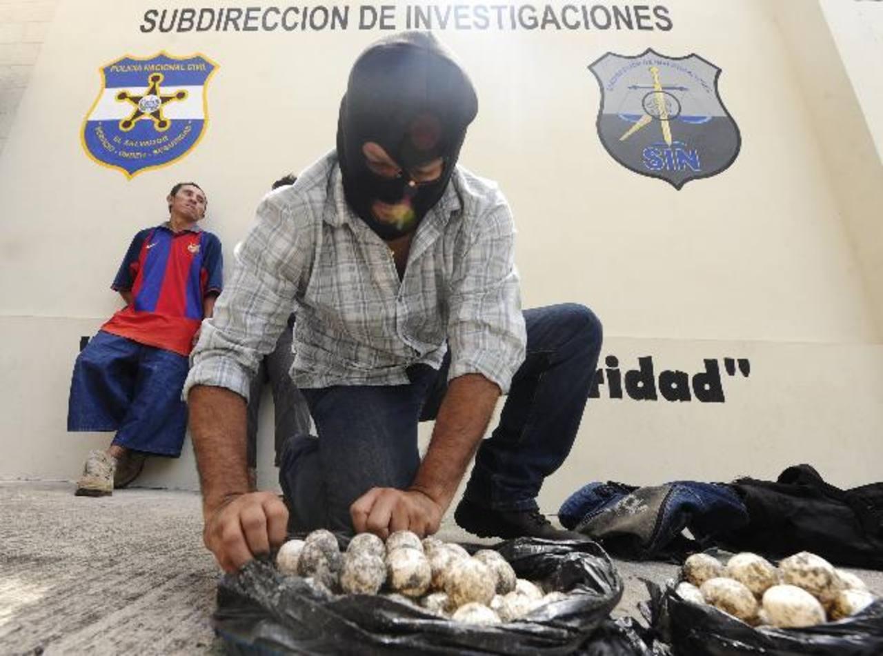 La venta y consumo de huevos de tortuga implica penas en prisión de entre 3 y 5 años.