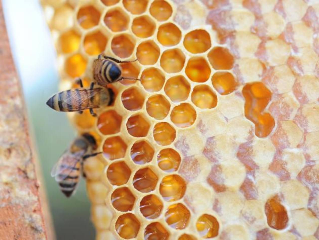 Las generadoras de la miel trabajan día y noche. Así se convierten en una fuente de trabajo y alimentación para muchos.