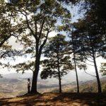 Bosques de café y bosques de pino se recorren rumbo a la cima del cerro El Panorámico, desde donde se visualiza la campiña nacional y territorios guatemaltecos.