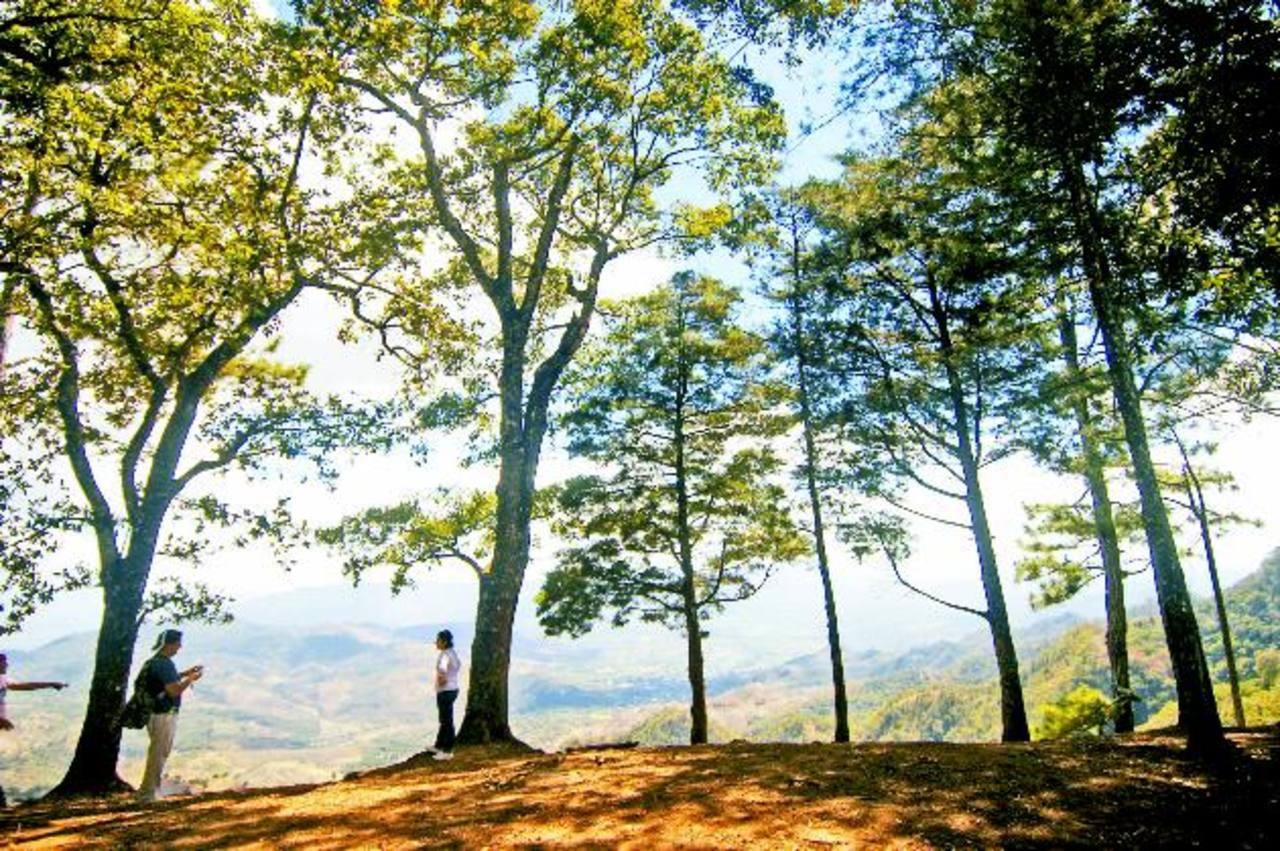 Bosques de café y bosques de pino se recorren rumbo a la cima del cerro El Panorámico, desde donde se visualiza la campiña nacional y territorios guatemaltecos. Foto EDH/ Douglas Urquilla