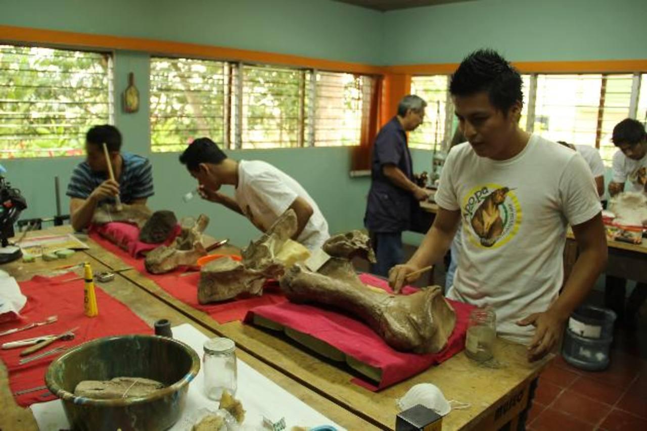 Los jóvenes tienen diversas opciones para capacitarse en los que más les llame la atención. foto edh / CORTESÍAJóvenes en la limpieza de las piezas fósiles encontradas en el Tomayate. foto edh / CORTESÍAEl restaurador José López instruye a los partic