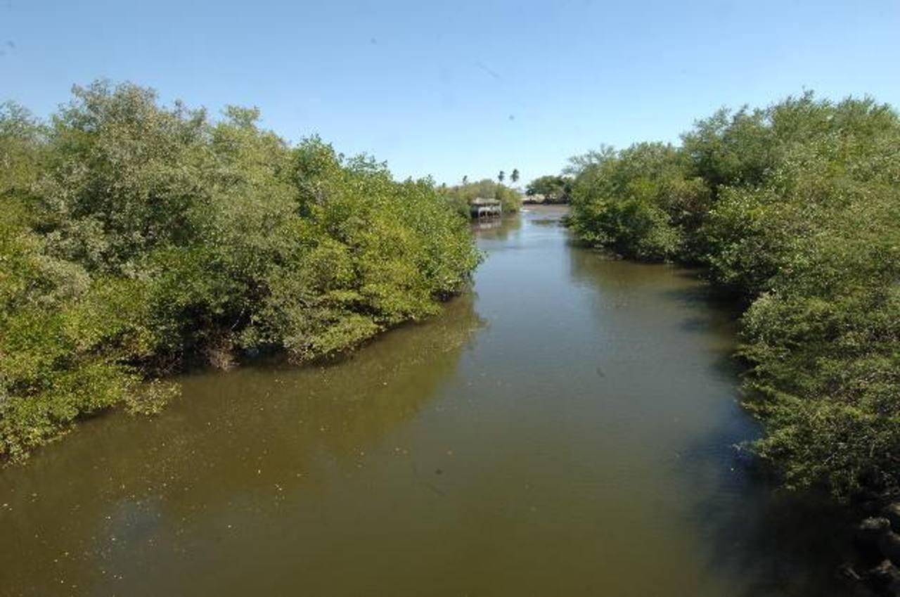 Cerca del terreno de Corsatur hay un manglar que protege la biodiversidad marina. Foto EDH / Miguel Villalta
