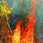 El 7 de marzo, bomberos combatió un incendio en Casa Blanca, Changallo, Ilopango. Foto EDH / Archivo
