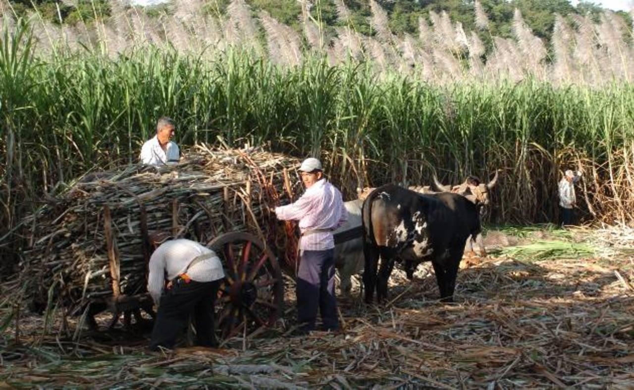 El cultivo de caña de azúcar genera miles de empleos.