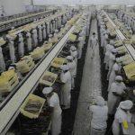 En la planta atunera del Grupo Calvo, ubicada en el departamento de La Unión, trabajan unas 1,200 personas. foto edh / archivo