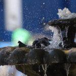 Un ave se baña en una fuente para sofocar el calor. Foto/ Archivo