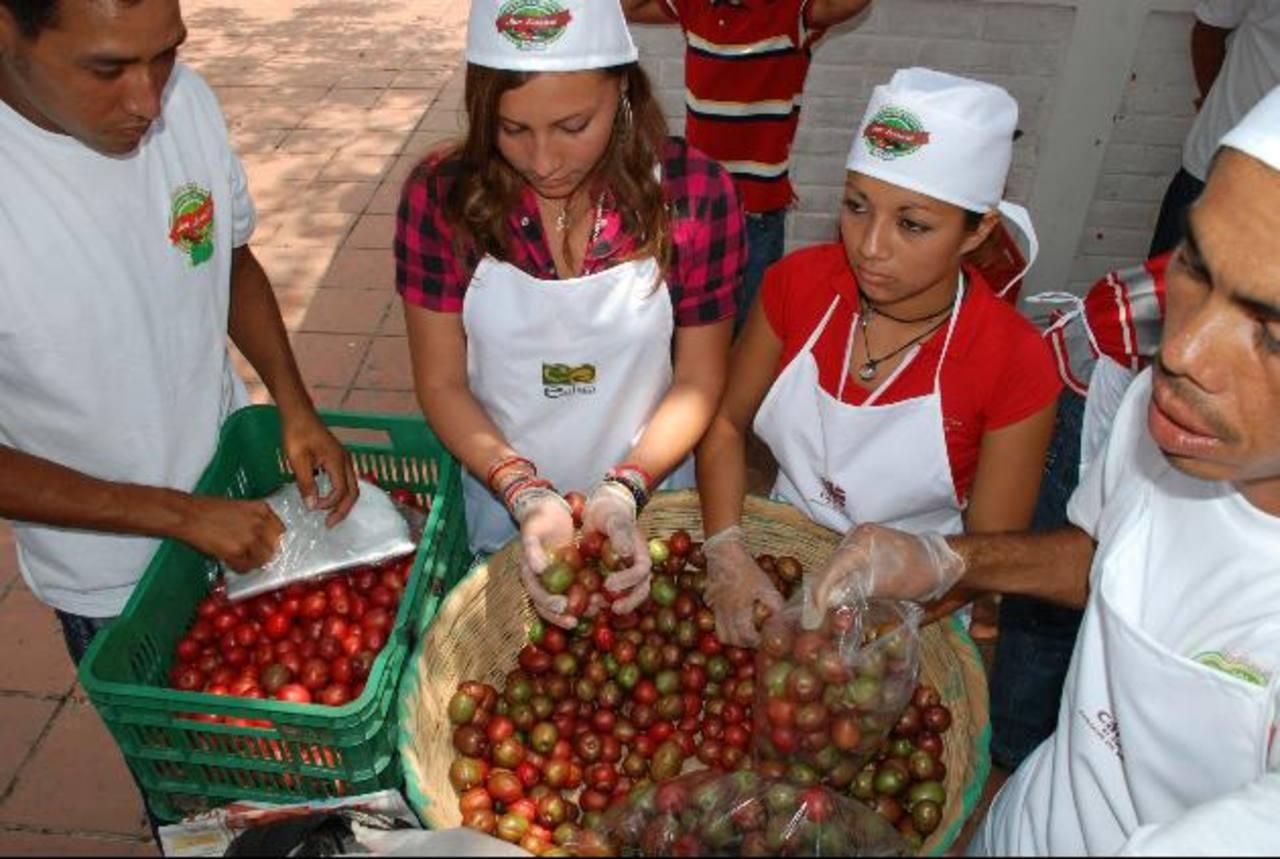 Datos de la cooperativa estiman que una buena parte de la población de San Lorenzo cultiva jocote. foto EDH / CRISTIAN DÍAZ
