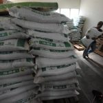 Según la Asociación de Proveedores Agrícolas cada quintal de semilla cuesta en promedio $125. La rentabilidad de este insumo es de 60 quintales. foto edh / archivo