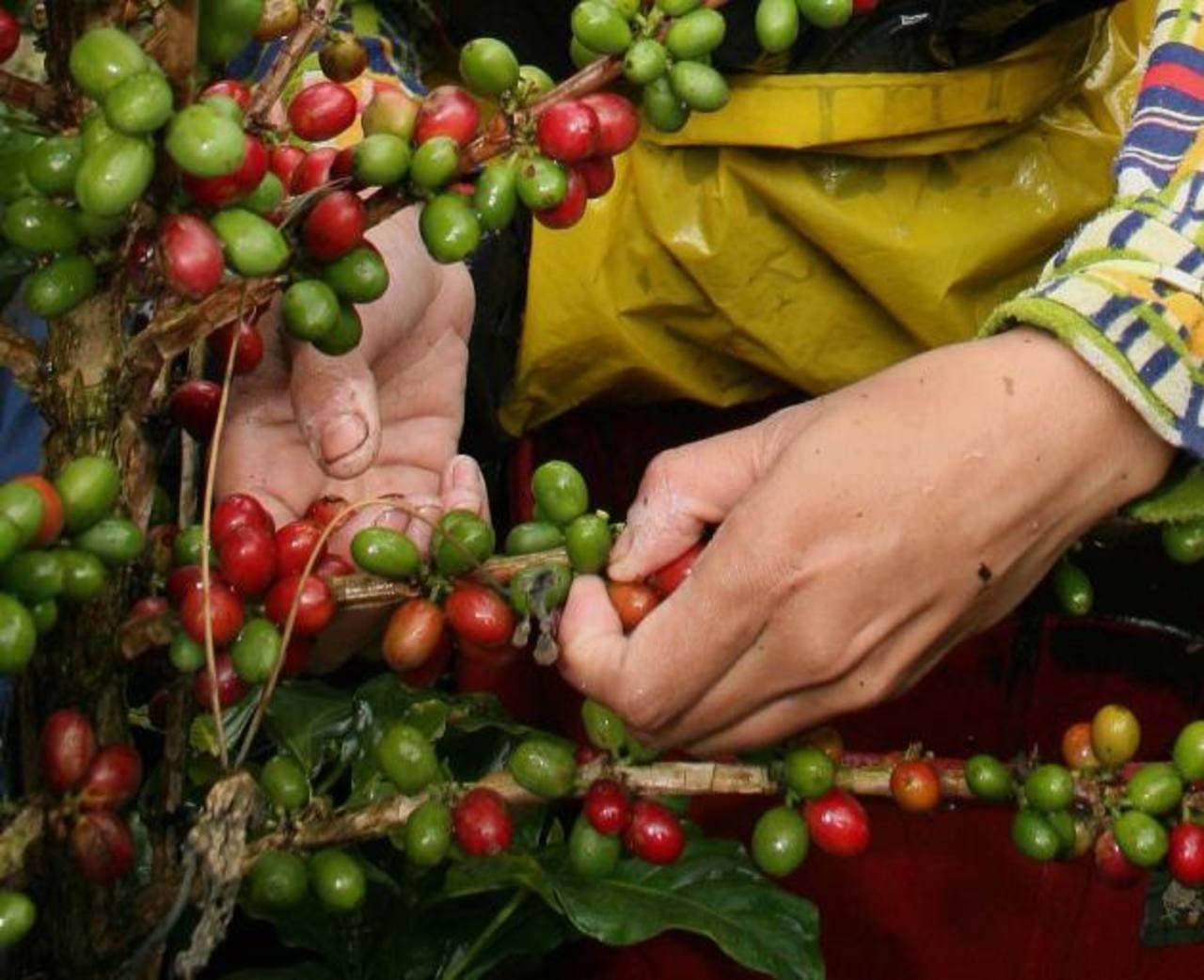 Colombia es de los mayores exportadores del grano. Foto EDH