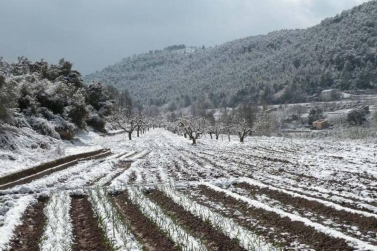 Las nevadas impactaron las cosechas de trigo. Foto EDH