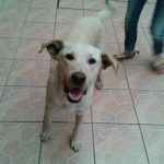Este es Calletano un perrito callejero que es cuidado por varias familias. FOTO Retomada del Facebook de Velásquez.