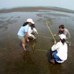 Investigan el pasto marino de la Bahía Jiquilisco