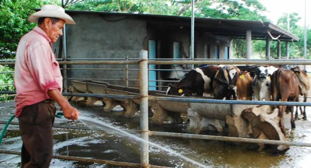 Las ganaderías de la zona oriental están viviendo tiempos de crisis y aseguran que no tienen apoyo del gobierno. foto edh /lucinda quintanilla