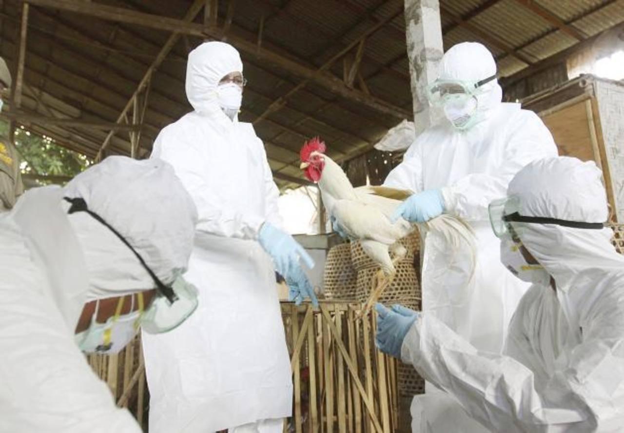 Estudios científicos del virus han establecido que a las personas se lo transmiten las aves.
