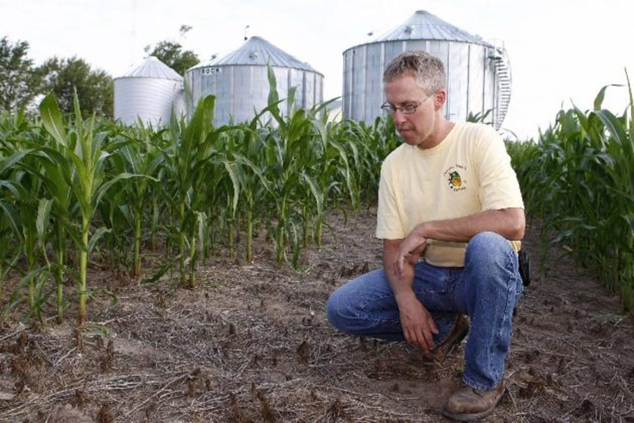 Las sequías del año anterior afectaron las plantaciones de maíz en EE. UU. foto edh/archivo