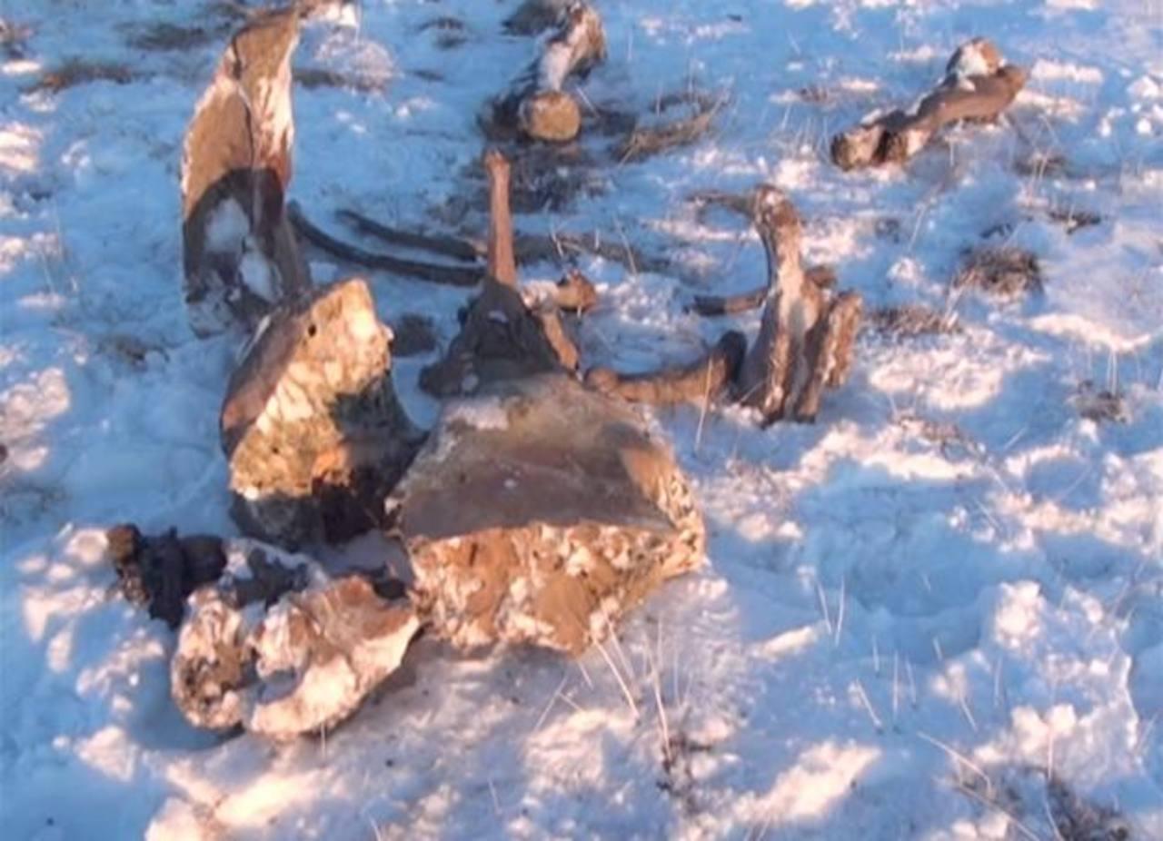 Imagen difundida por la televisora rusa Rossiya que muestra un cadáver de mamut enterrado en nieve en la isla ártica rusa de Lyakhovsky. Foto/ AP