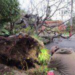 Un árbol cayó sobre un vehículo en marcha en Ahuachapán. El conductor resultó gravemente herido. Foto EDH/ Mauricio Guevara