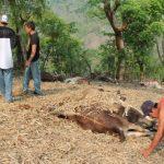 Los animales fueron encontrados muertos esta mañana. FOTO EDH Saúl Barrera