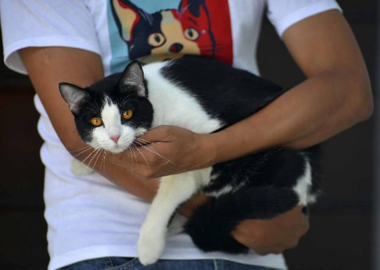 El gato Morris, tiene más de 115 mil seguidores en redes sociales hasta el momento. Foto/ Reuters