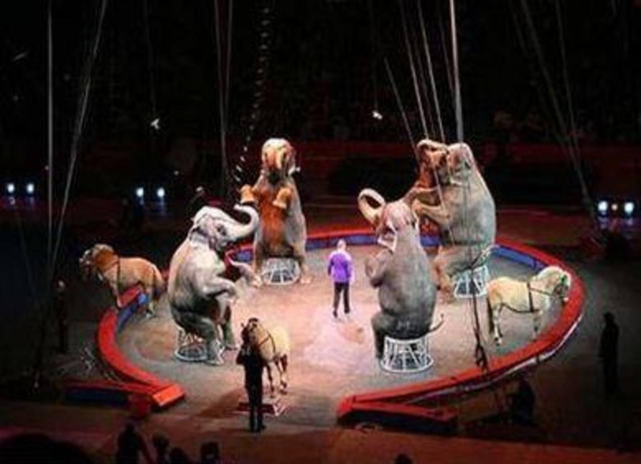 La prohibición rige para animales silvestres, nativos y exóticos que van desde elefantes y leones hasta especies de simios y aves. Foto/ Archivo