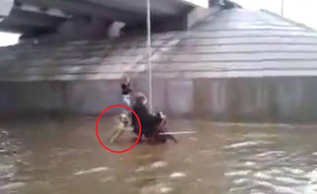 Vídeo: Perro empuja a anciano en silla de ruedas durante inundación