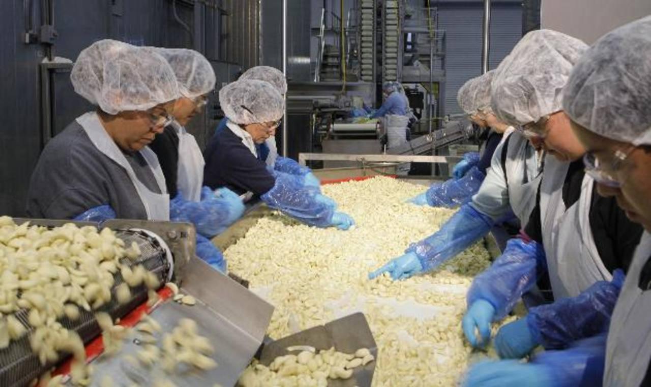Trabajadoras seleccionan ajos en Christopher Ranch, en Gilroy, California. foto edH /archivo
