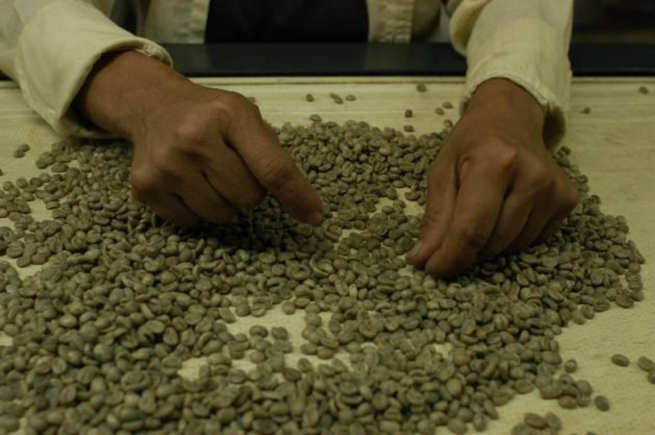 El café es de los productos que el Reino Unido más compra a El Salvador, hasta mayo sumaba $5.2 Mlls. El país también tiene oportunidad con productos de manufactura. Foto EDH /archivo