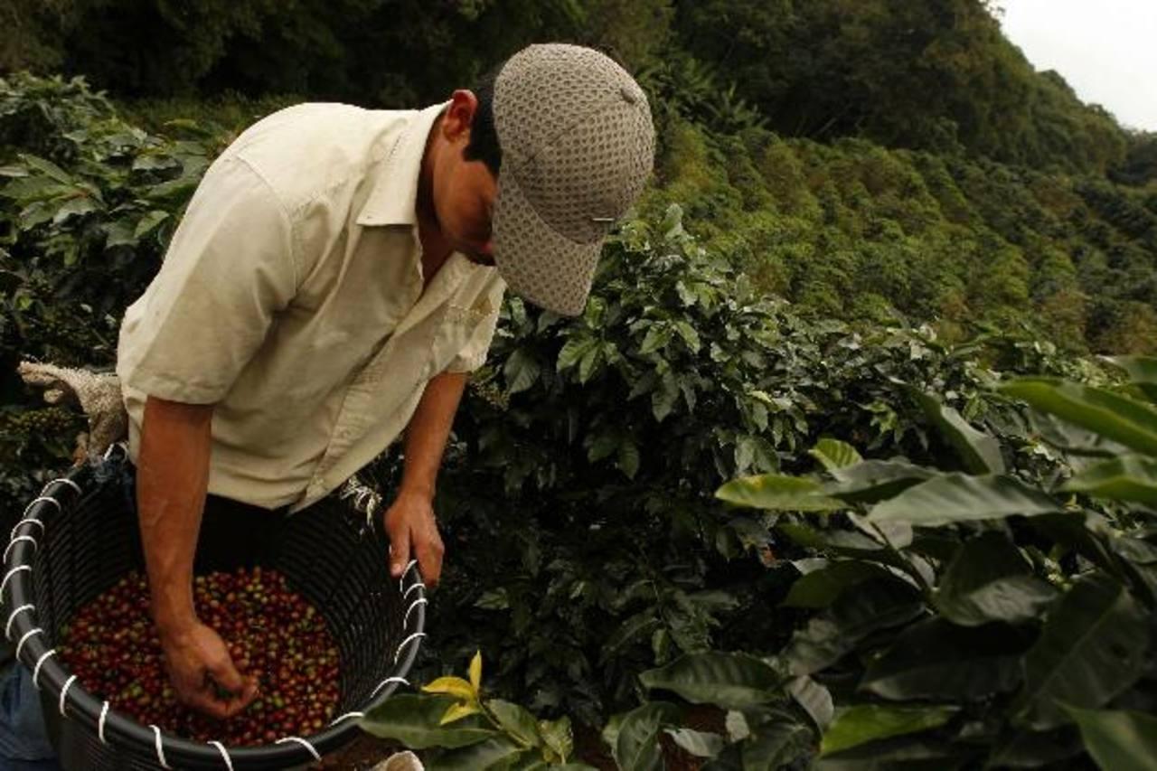 Los costarricenses quieren aprovechar la invitación de China por adquirir café de ese país. foto edH